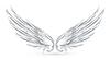 Flügel-weiße,