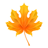 ID 3775596 | Maple Leaf | Klipart wektorowy | KLIPARTO
