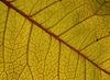 피 묻은 잎 | Stock Foto