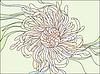 Chrysantheme | Stock Vektrografik