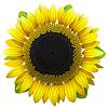 Słonecznikowy | Stock Vector Graphics