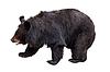 Schwarzbär | Stock Foto