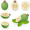 피 조아 (Feijoa) | Stock Vector Graphics