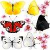 Sammlung von Schmetterlingen