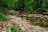 ID 3875630 | Dichte Wälder | Foto mit hoher Auflösung | CLIPARTO