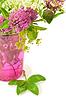 클로버 꽃 | Stock Foto