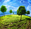 ID 3913988 | Ziemia z drzew. Streszczenie naturalne tła | Foto stockowe wysokiej rozdzielczości | KLIPARTO