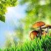 ID 3913998 | Абстрактные фоны с природной красотой грибами | Фото большого размера | CLIPARTO