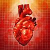 Human Heart. Abstrakcyjna tła dla medycznych | Stock Foto