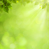 ID 3914519 | Letnie naturalne tła dla projektu | Stockowa ilustracja wysokiej rozdzielczości | KLIPARTO
