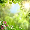 Ahornblätter. abstrakter natürlichen Hintergrund für | Stock Photo