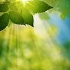 ID 3914826 | Piękny letni dzień w lesie, naturalne tło | Stockowa ilustracja wysokiej rozdzielczości | KLIPARTO