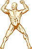 Векторный клипарт: мужской анатомии человека тело строителя сгибание мышц