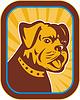 Bulldog und Boston Terrier hybride