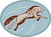 Grauer Wolf springen und angreifen
