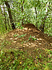 숲 개미 언덕 | Stock Foto
