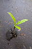 Growing green sprout in asphalt | Stock Foto