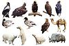 Eingestellt von Tieren | Stock Photo