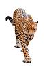 Леопард | Фото