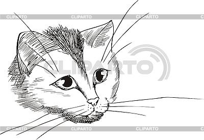 Kopf der netten Katze | Stock Vektorgrafik |ID 3000433