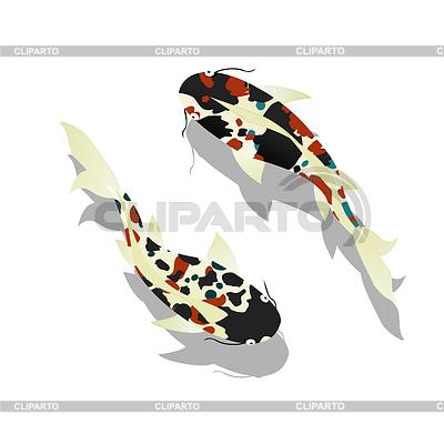 Carp. Koi Fish | Stockowa ilustracja wysokiej rozdzielczości |ID 3881416