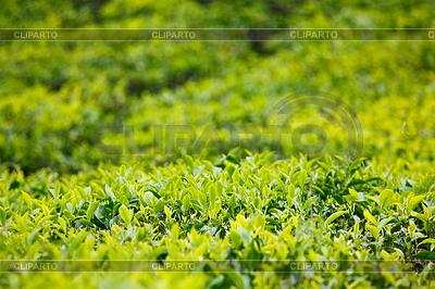 чай голубое небо состав