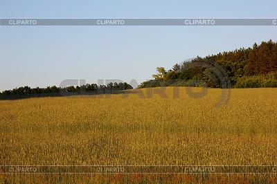 Landschaft | Foto mit hoher Auflösung |ID 3820807
