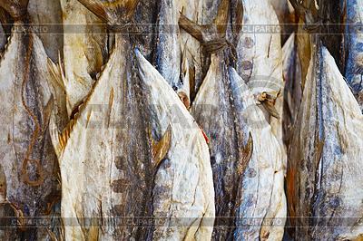 Getrocknete Thunfisch auf dem Markt in Sri Lanka | Foto mit hoher Auflösung |ID 3892167