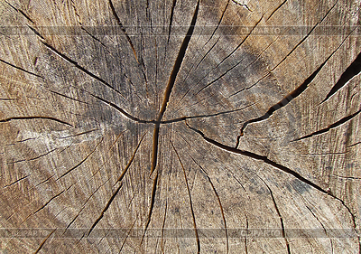 Texture of tree. log | 높은 해상도 사진 |ID 3957604