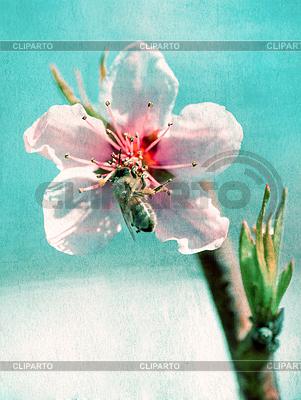 Teksturowane starych papieru tła, pszczoła zbiera miód o. | Foto stockowe wysokiej rozdzielczości |ID 3775658