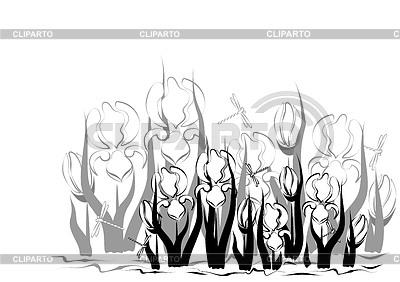 Hintergrund mit Iris | Stock Vektorgrafik |ID 3839095