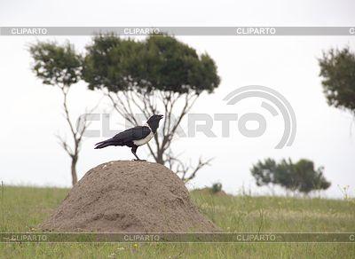 하나의 까마귀 언덕에 앉아있다 | 높은 해상도 사진 |ID 3729889