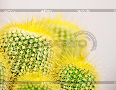 Kaktus z bliska | Foto stockowe wysokiej rozdzielczości |ID 3808238