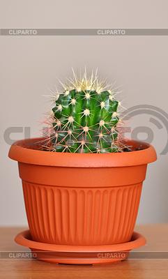 уход за кактусами в доме