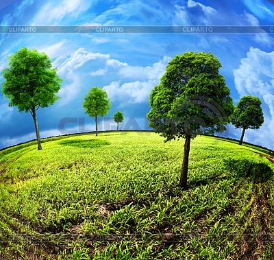 Ziemia z drzew. Streszczenie naturalne tła | Foto stockowe wysokiej rozdzielczości |ID 3913988
