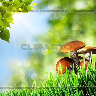 Абстрактные фоны с природной красотой грибами | Фото большого размера |ID 3913998
