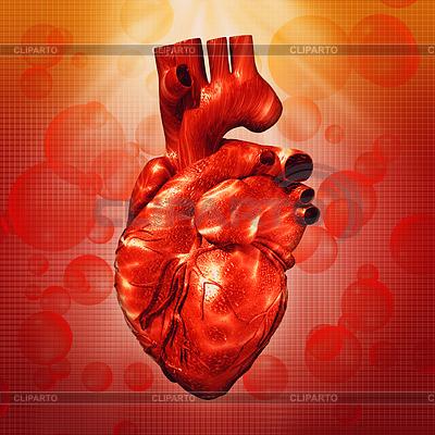 Человеческое сердце. Абстрактные медицинские фоны для вашего | Фото большого размера |ID 3914498