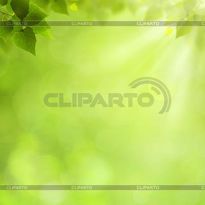 Letnie naturalne tła dla projektu | Stockowa ilustracja wysokiej rozdzielczości |ID 3914519