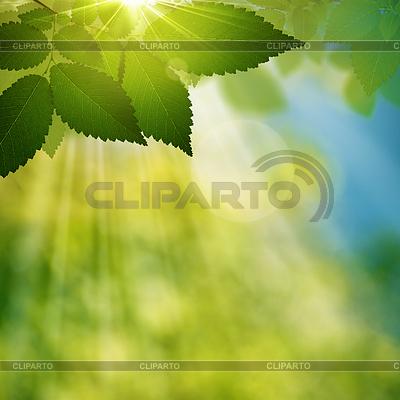 Schöner Sommertag im Wald, natürlicher Hintergrund | Illustration mit hoher Auflösung |ID 3914826