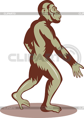 Иллюстрация доисторического человека или обезьяны ходьбе | Иллюстрация большого размера |ID 3964431