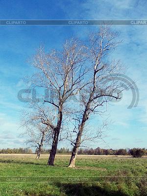 Три тополя сушеные | Фото большого размера |ID 3968409