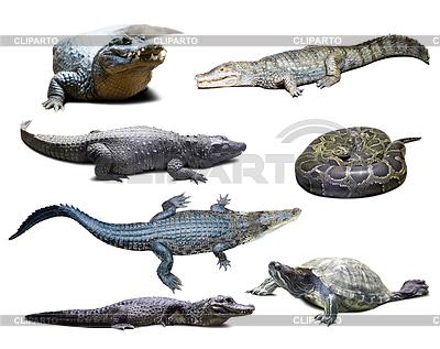 Reptilien mit Schatten | Foto mit hoher Auflösung |ID 3986778