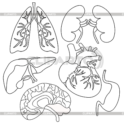 kidney diagram external  kidney  free engine image for
