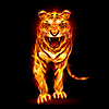Vector clipart: Fire tiger